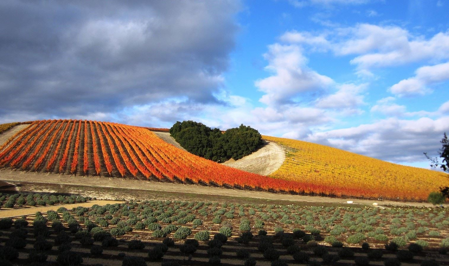 Niner Winery in Paso Robles, CA